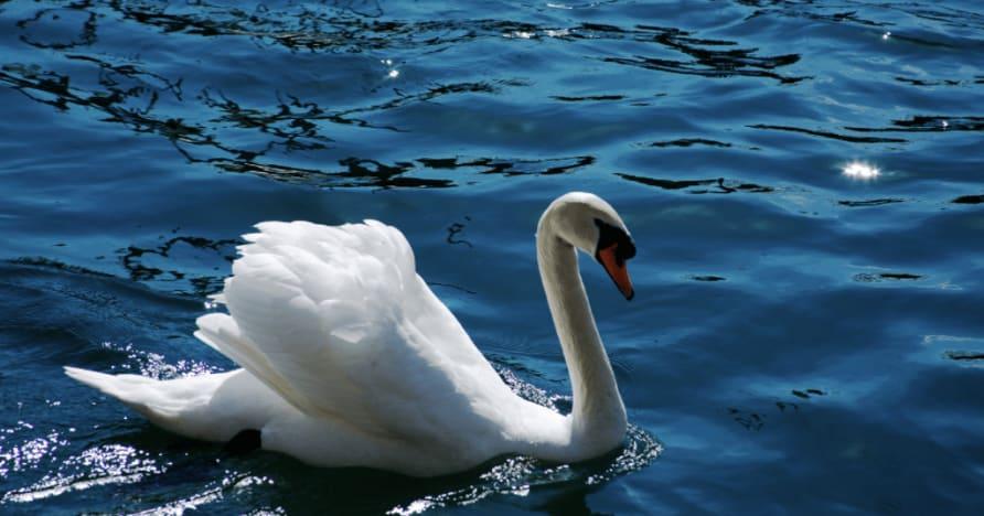 Ainsworth Gaming의 Royal Swan: 전체 리뷰